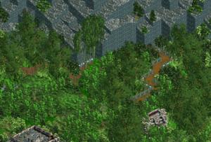 Rain Forest Plateau.png